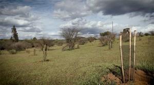 NATUREX PLANTACIONES